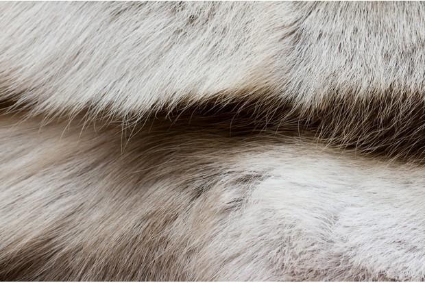 texture of the reindeer's fur closeup