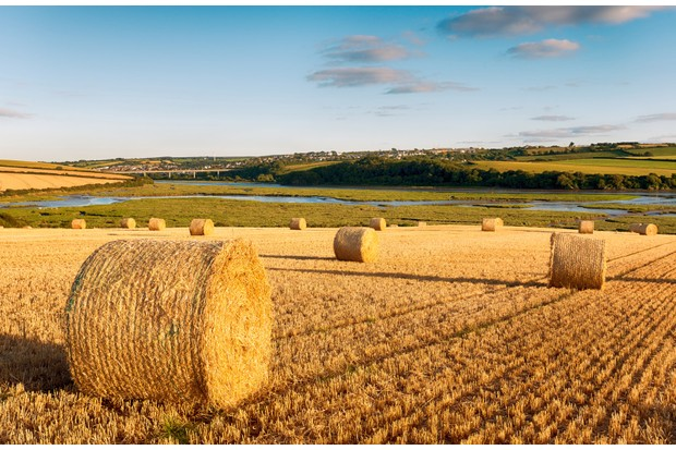 Hay bales drying above the Camel River at Wadebridge in Cornwall