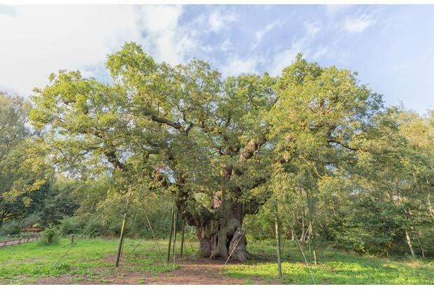 Robin-Hood-Shutterstock-28129-30f9307