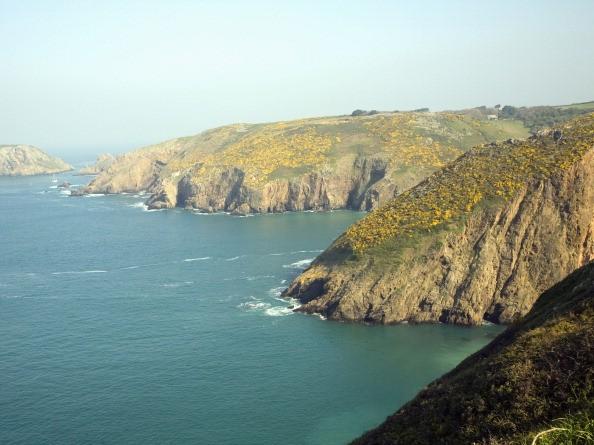 Cliffs with yellow flowers of common gorse bush, Island of Sark, Channel Islands, Great Britai. (Photo By: Geography Photos/UIG via Getty Images)