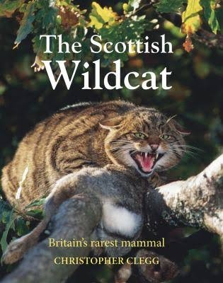 Scottish20Wildcat-7e70d2d