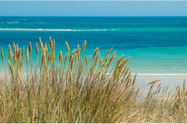 Sea_Lyme_Grass_on_Shell_Beach_Herm_0-0c36374