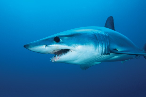 The rise of the shark in British waters - Countryfile com