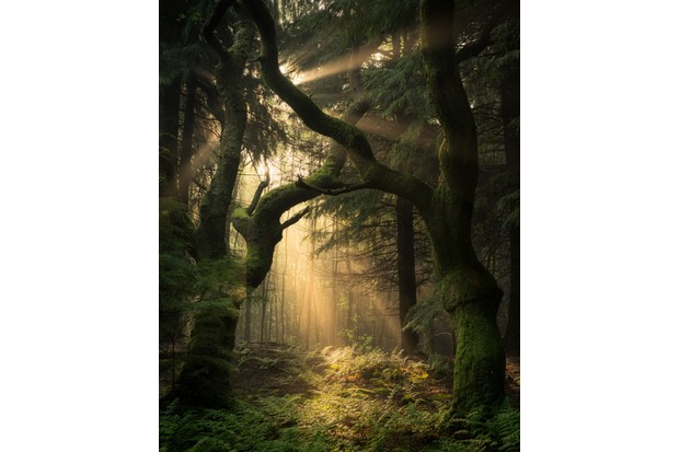 Simon-Baxter2C-Guardians-of-the-Forest2C-Llanrhychwyn2C-Snowdonia2C-Wales2C-Landscape-Photographer-of-the-Year2C-2016-ab6f935