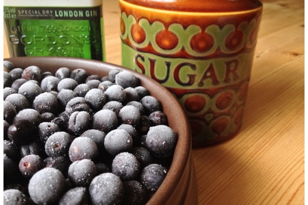 Sloe gin ingredients