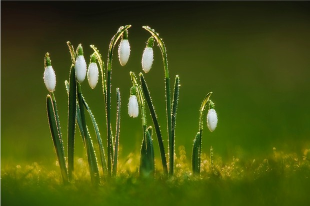 Image result for spring emerging from the darkness of winter