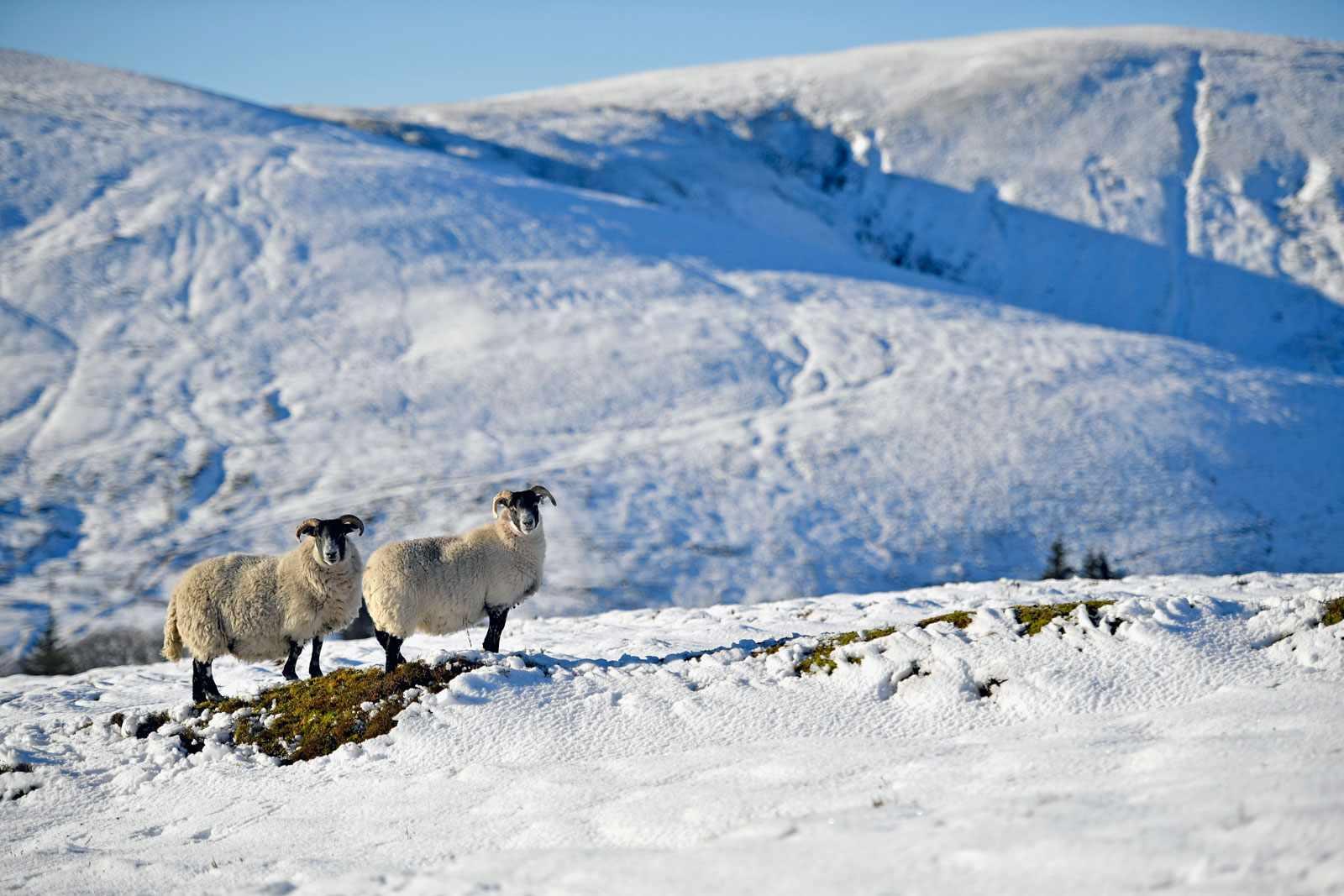 Snowscotland-b9ed590