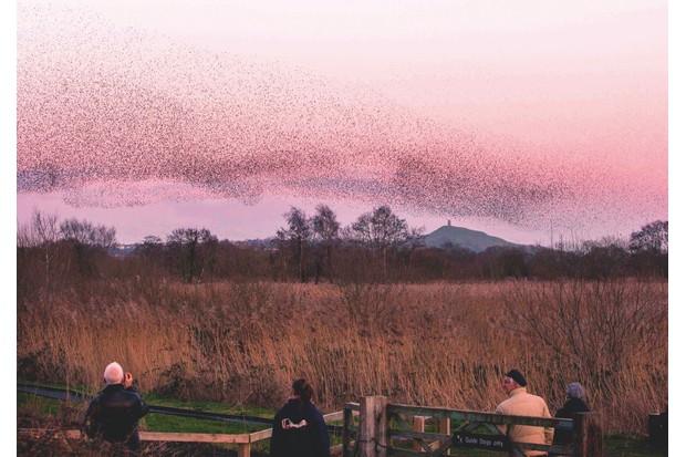 Starlings-5463e69
