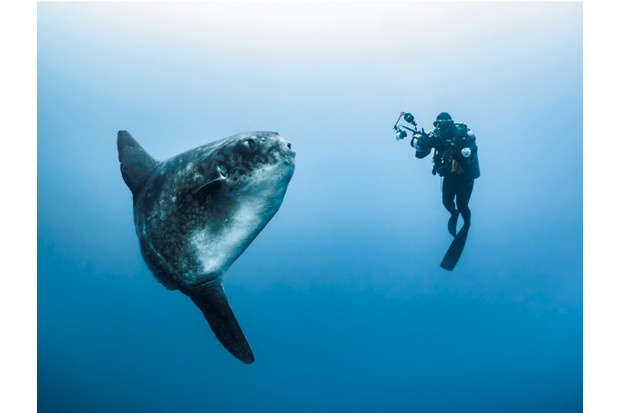 Sunfish_GettyImages_0-8b5b8a6