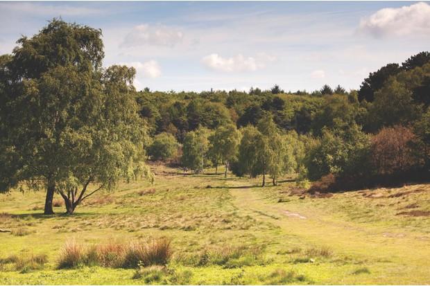 DA6E2M An unspoilt view of Sutton Park.