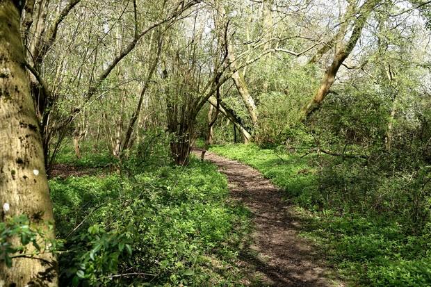 Sweffling woods, Suffolk