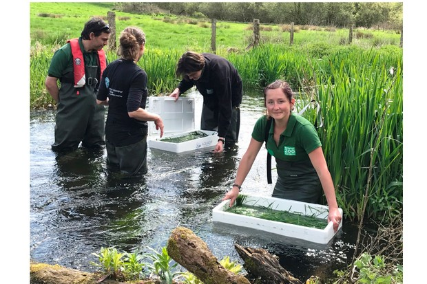 Teams20from20Bristol20Zoo20and20Hampshire202620Isle20of20Wight20Wildlife20Trust20release20crayfish20into20the20River20Itchen-b37ab30