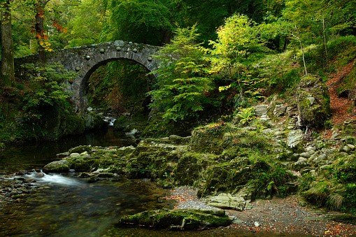 Foleys bridge in Tollymore forest park
