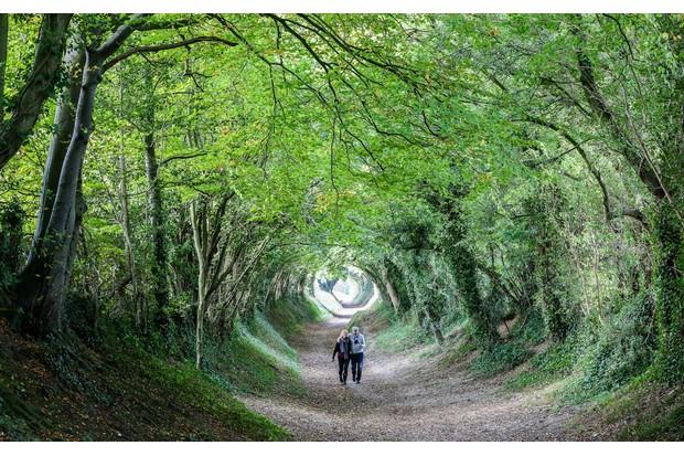 Trees-surveying-661760402-63f9060