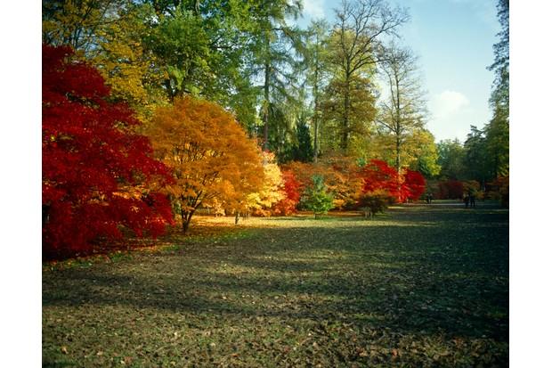 Autumn colours (Getty)