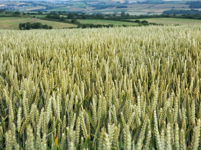 John Craven: Does the future of farming lie in mimicking nature?