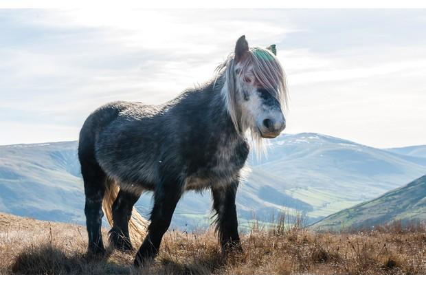 Wild-Horses-5-ca36776