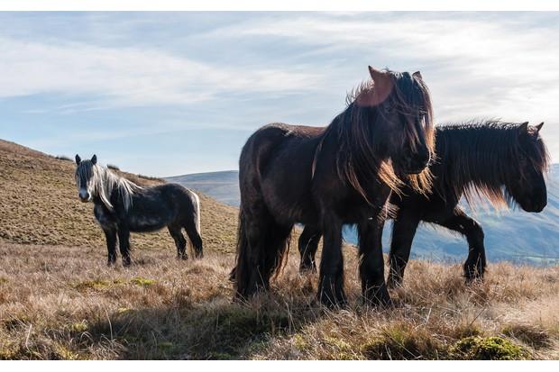 Wild-Horses-7-7f85437