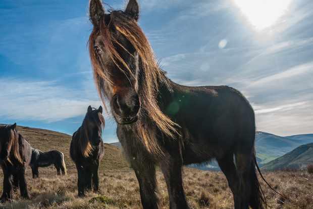 Wild-Ponies-1-_1-0e61105