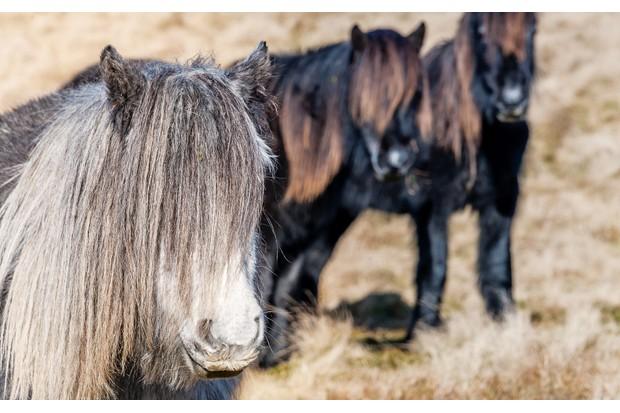 Wild-horses-3-d1f1b5c