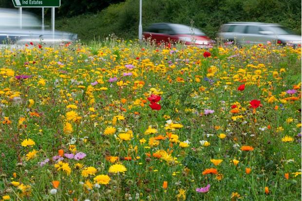Wildflower-roadside-a0a37dc