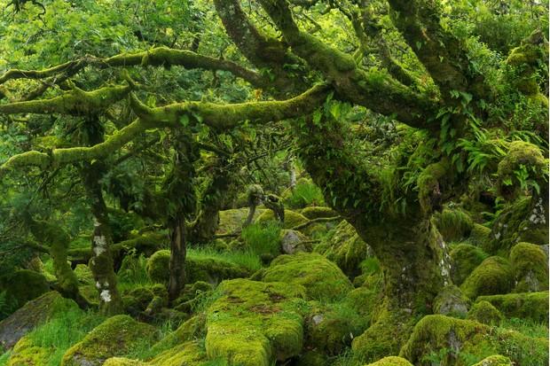 Wistman27s-Wood-Dartmoor-d18275a