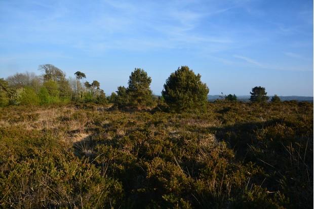 Woodbury-Common-33cd944