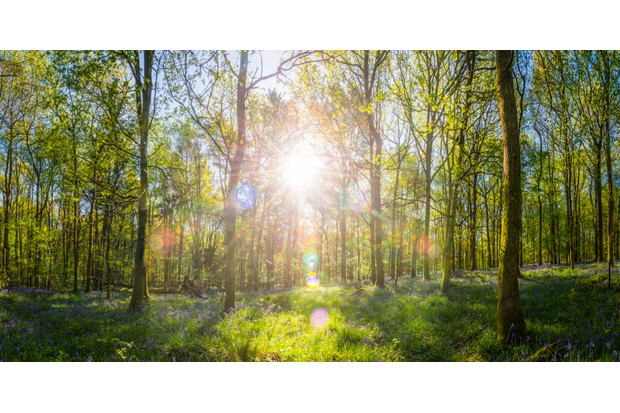 Woodland-095272f