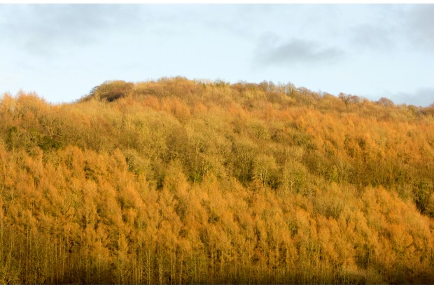 Beautiful autumn colours of the Wye Valley, best considered over a pint of ale at The Brockweir Inn