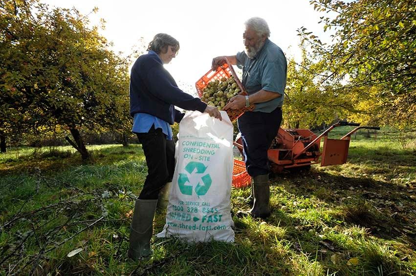 Ron and Beverley Barter collecting apples for making Brimblecombe's Cider at Farrant Farm, Devon
