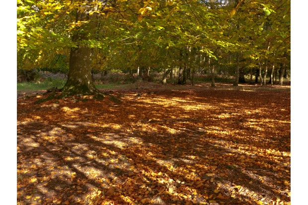 ashridgeestateherefordshire-2268a4d
