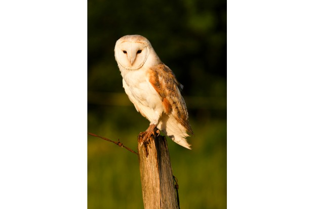 How To Draw A Barn Owl Countryfile Com