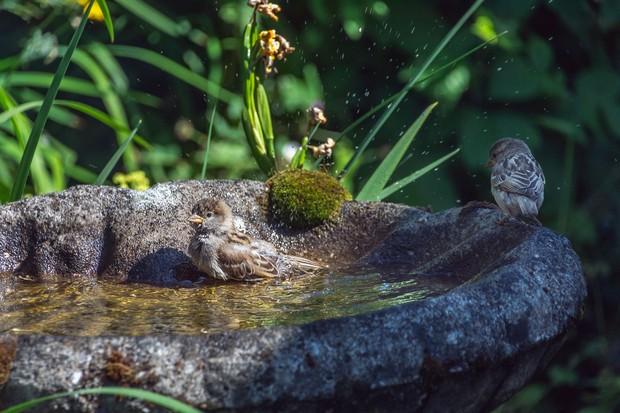 bird-bath-f15a807