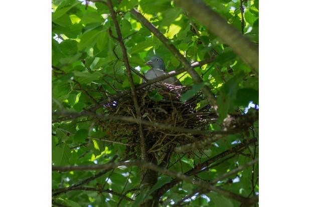 bird-nest-b452876