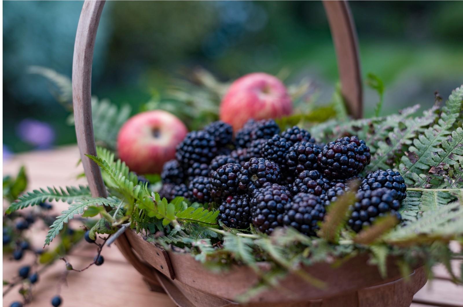 blackberries-and-apples-b430185