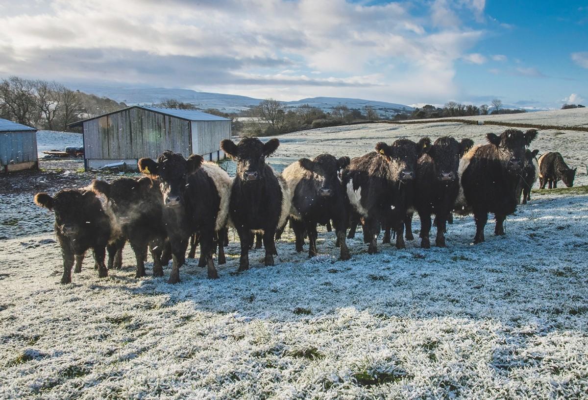 blakc-sheep--e5b3fd0