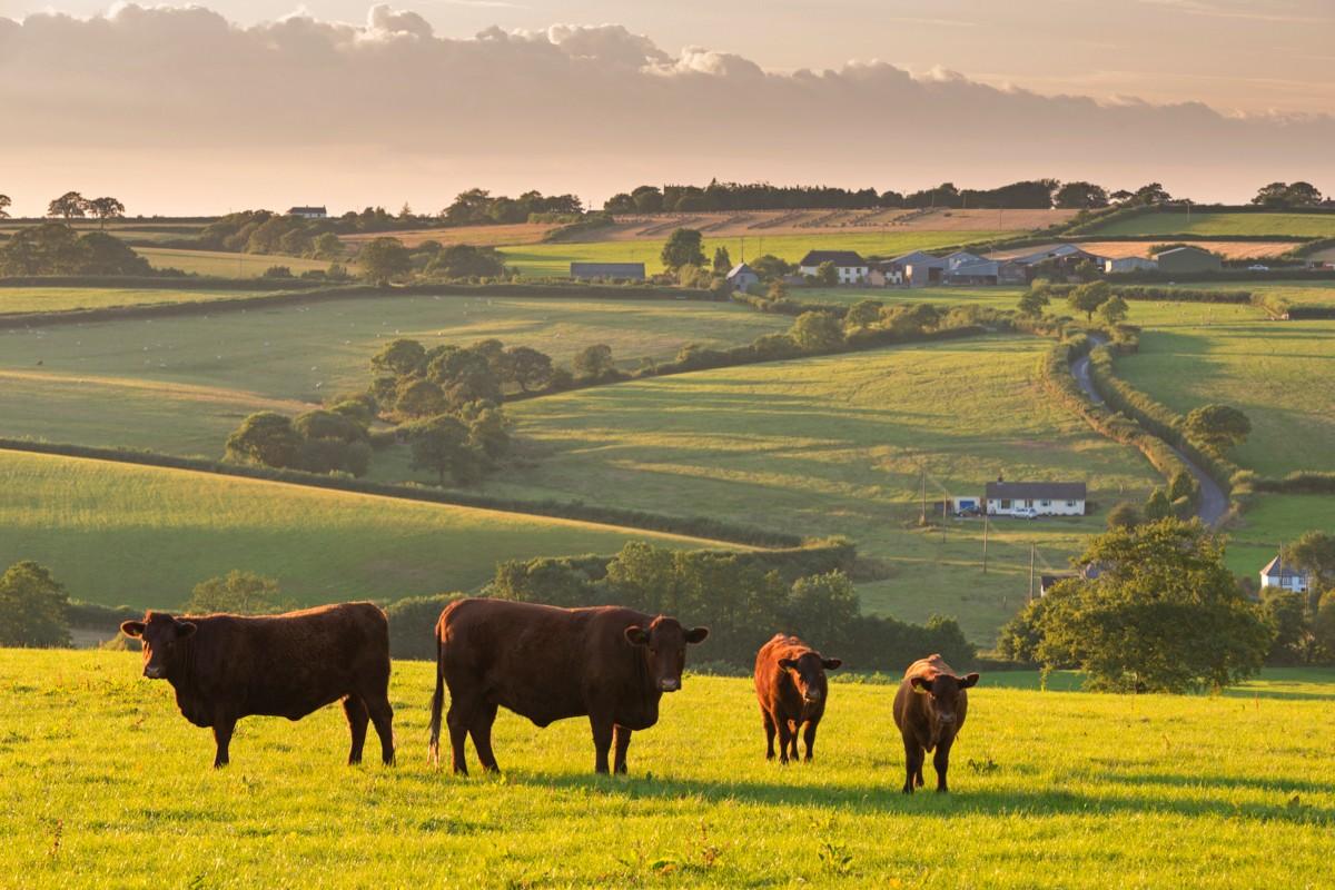 british-countryside-survey-28adbf9