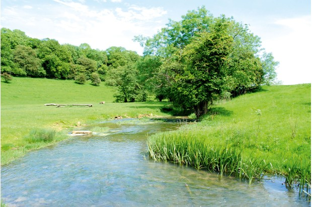 The clear waters of the Broadmead Brook hold a few trout, bullheads and crayfish