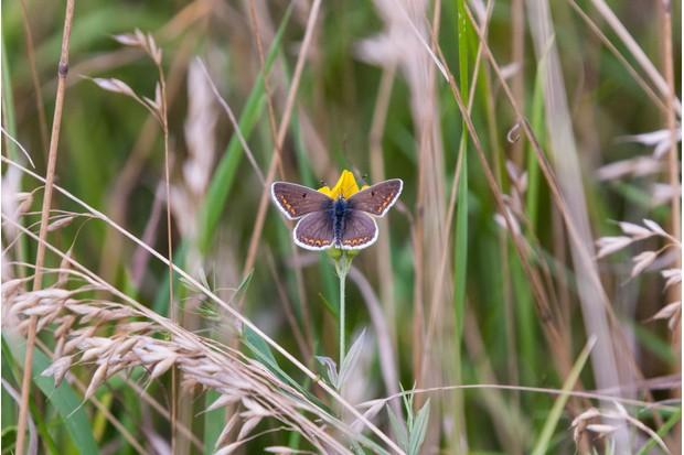 butterfly-95fcba2