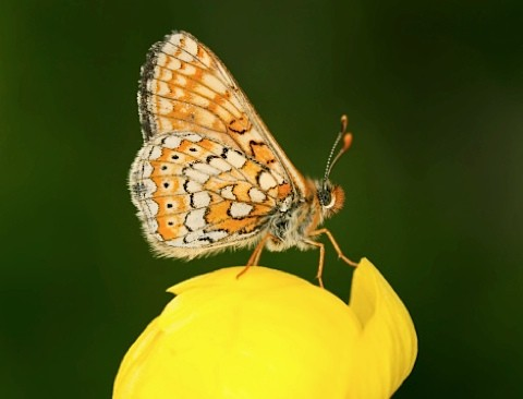 butterfly_main-9ea0c48