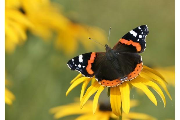 butterflyistockmain-28c312f