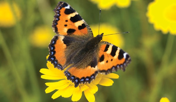 butterflymain-164f7ea