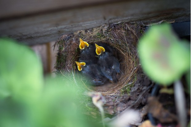 chicks-in-a-nest-1e19d66