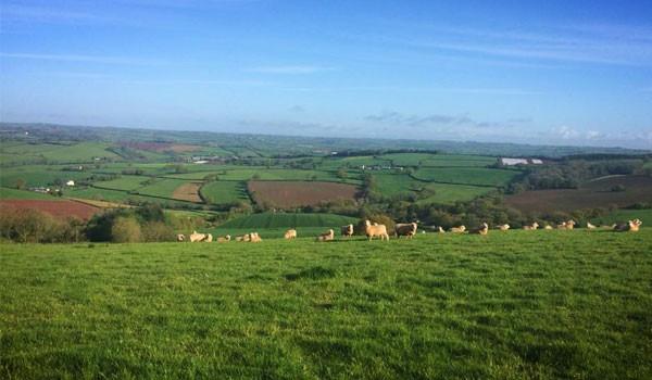 countrysidemain-4e55361