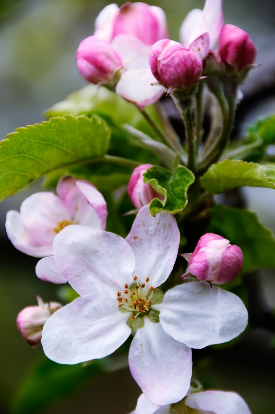 How to identify spring blossom