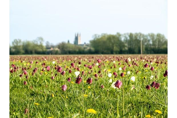 Cricklade North Meadow