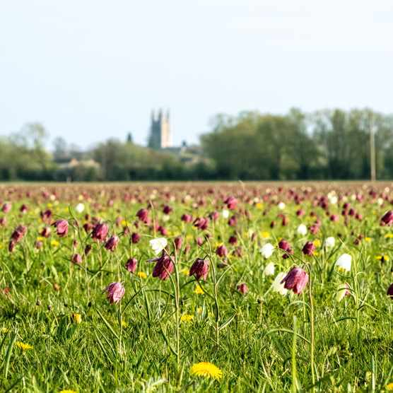Cricklade North Meadow