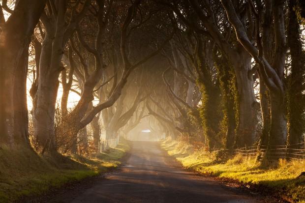 Dark Hedges, Antrim