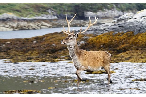 deer-02d4730