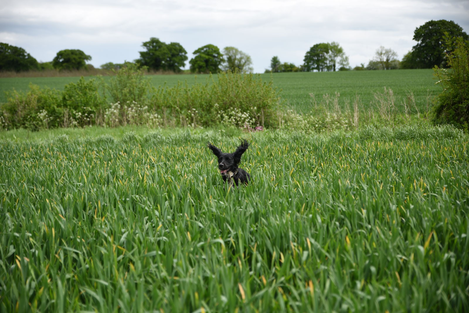 dog-in-long-grass-67333f1